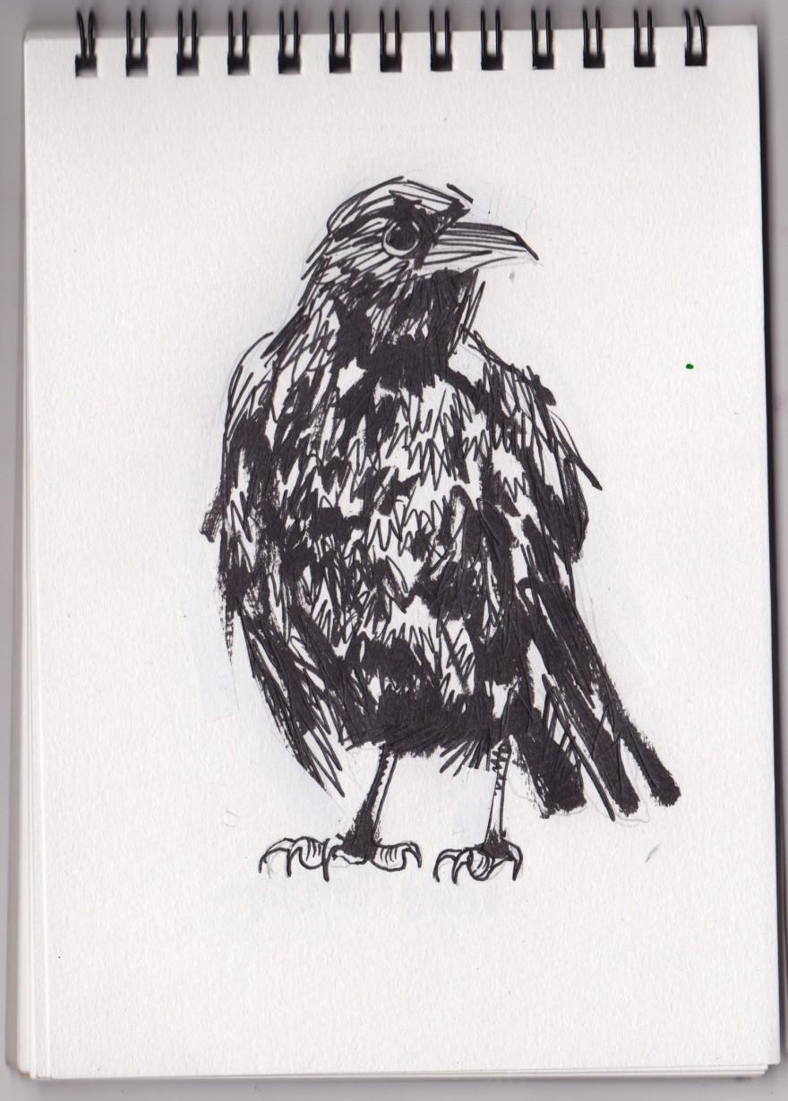 crow_0001
