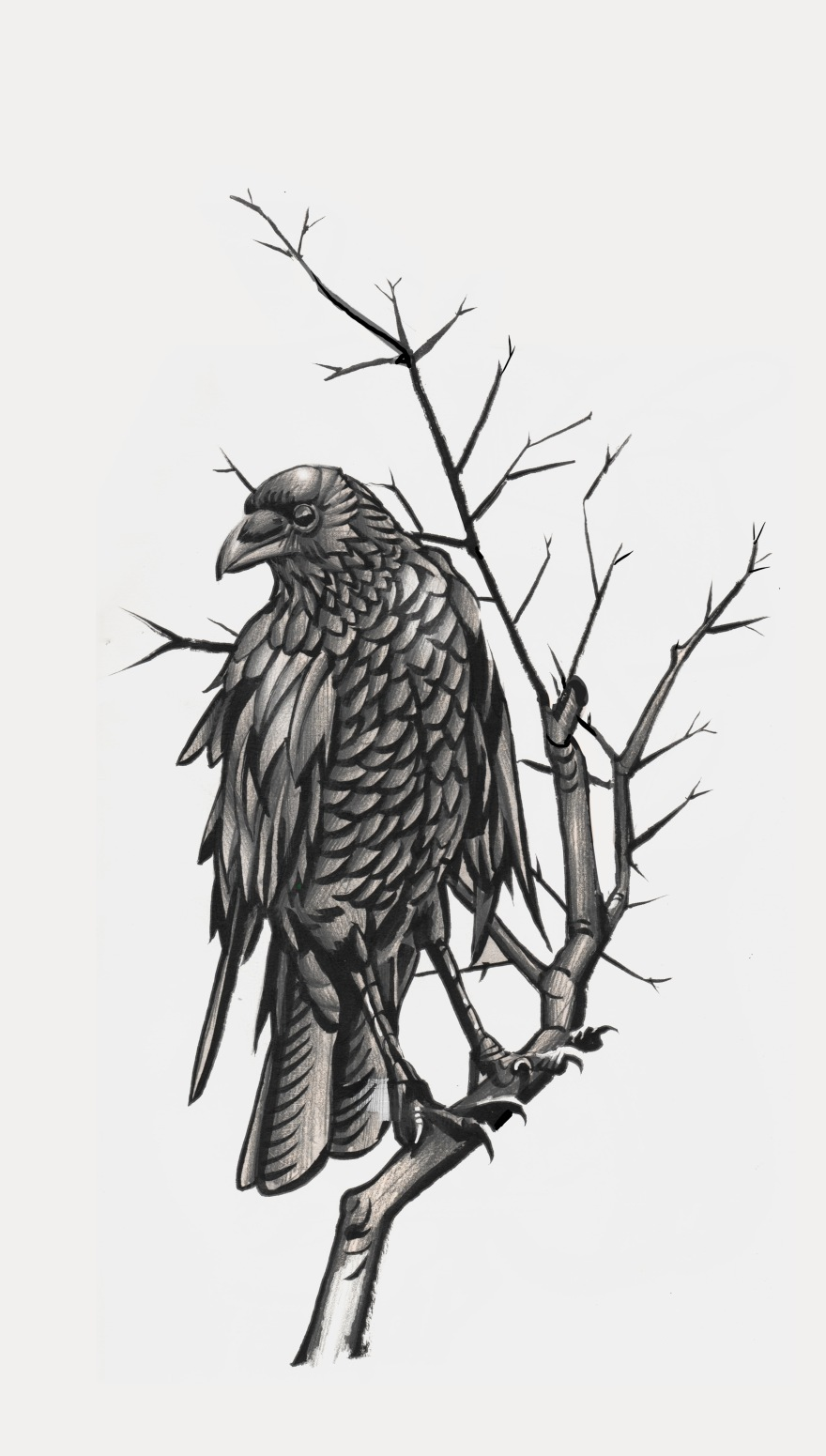 crow_branch